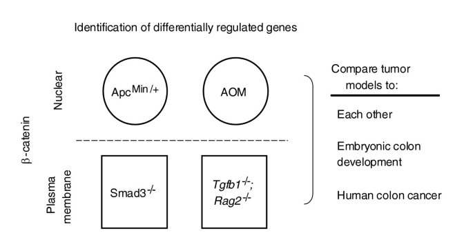 Transcriptional Recapitulation And Subversion Of Embryonic Colon Development By Mouse Colon Tumor Models And Human Colon Cancer Genome Biology Full Text