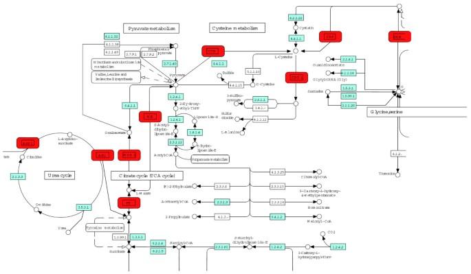 KEGG spider: interpretation of genomics data in the context