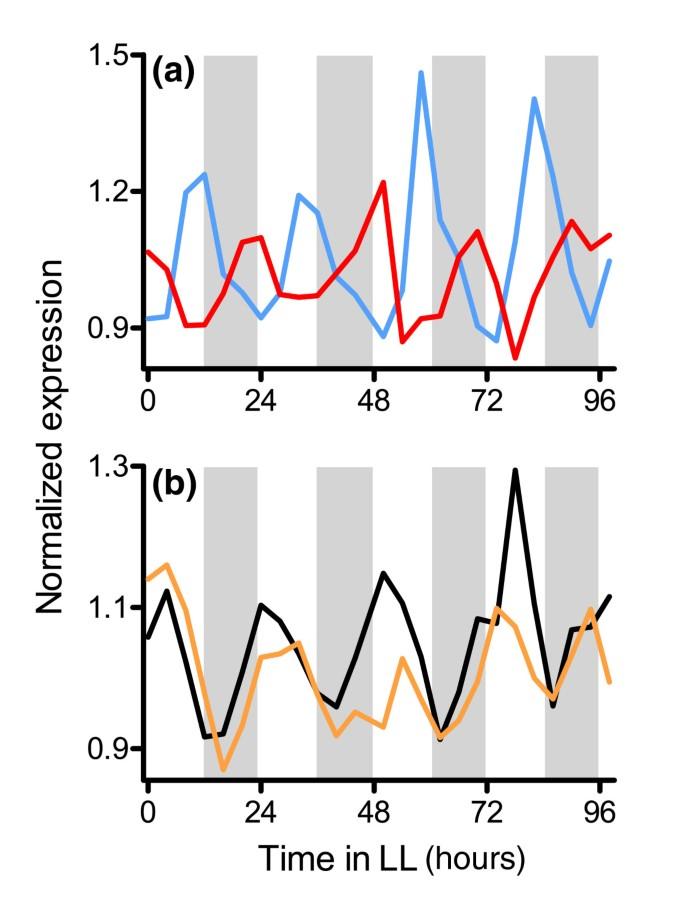 Global transcriptome analysis reveals circadian regulation