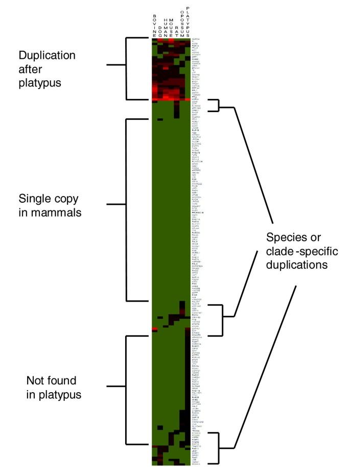 The bovine lactation genome: insights into the evolution of