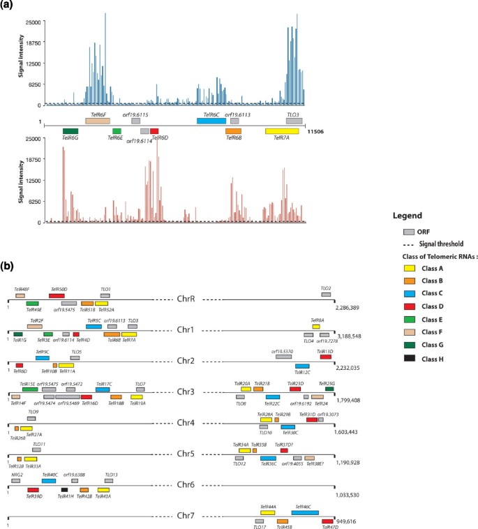 Experimental Annotation Of The Human Pathogen Candida Albicans