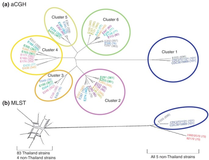 Genomic acquisition of a capsular polysaccharide virulence cluster
