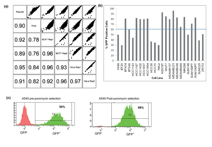High-throughput RNA interference screening using pooled