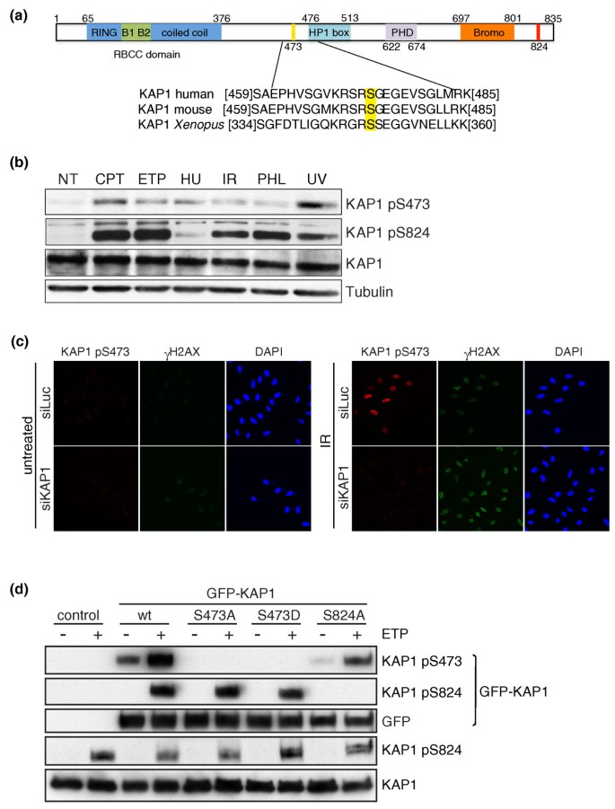 A phospho-proteomic screen identifies substrates of the