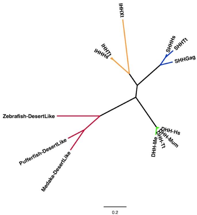 Genome sequence of an Australian kangaroo, Macropus eugenii