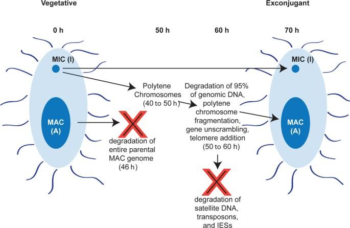 Cytosine methylation and hydroxymethylation mark DNA for