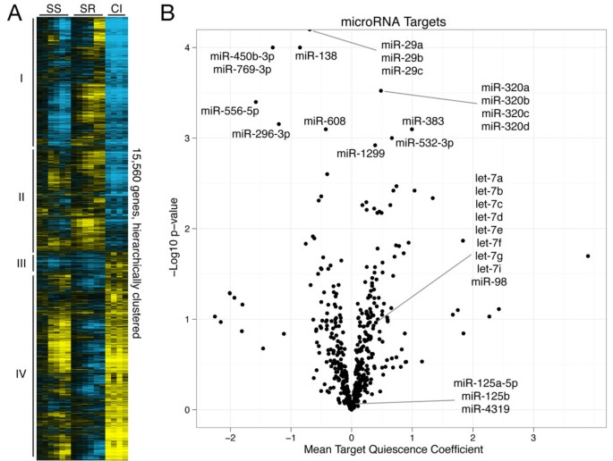 A microRNA network regulates proliferative timing and extracellular