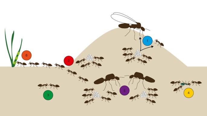 Ant genomics sheds light on the molecular regulation of