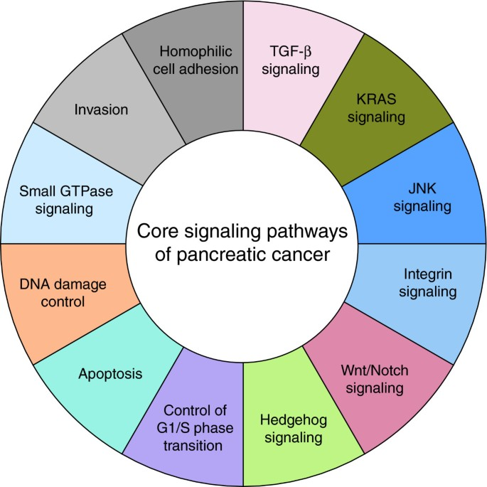 Pancreatic cancer genomics: insights and opportunities for