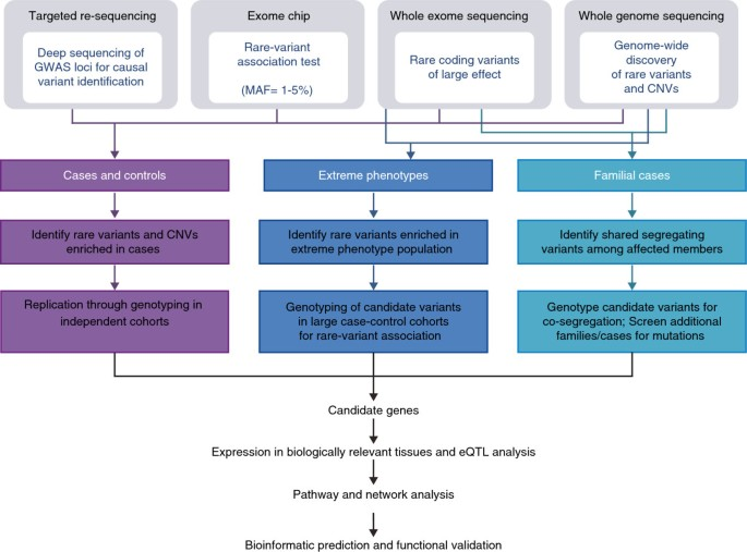 Genetic architecture of retinal and macular degenerative