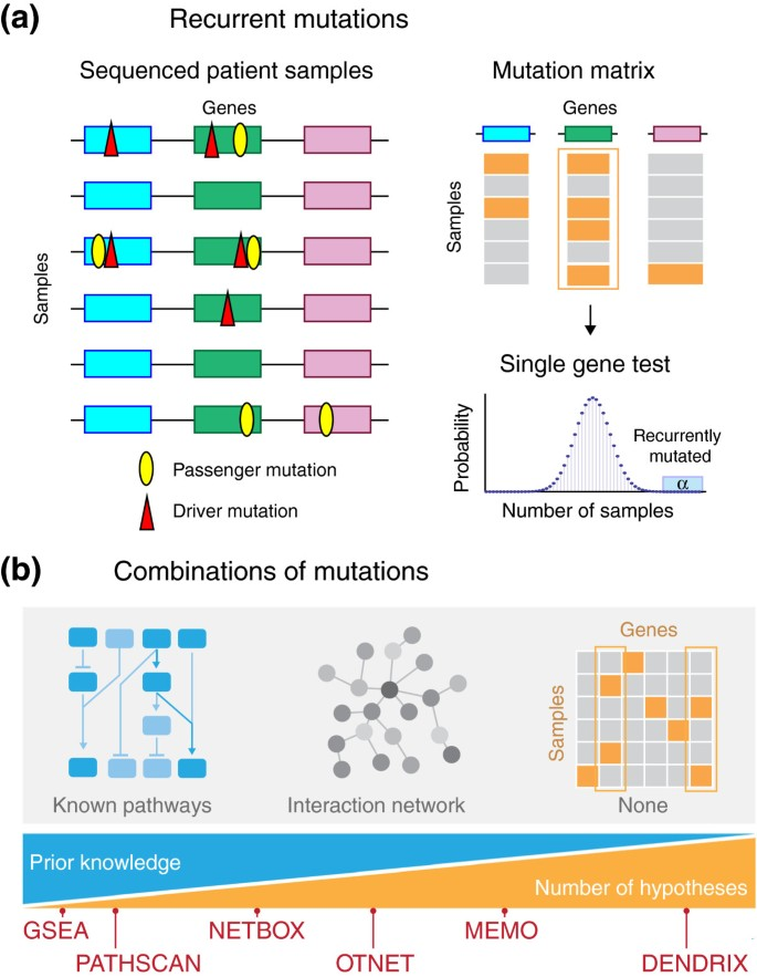 Identifying driver mutations in sequenced cancer genomes