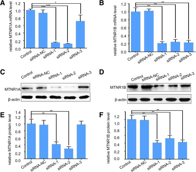 Melatonin receptor depletion suppressed hCG-induced testosterone