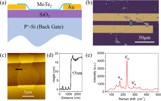 Conversion of Multi-layered MoTe 2 Transistor Between P-Type and N