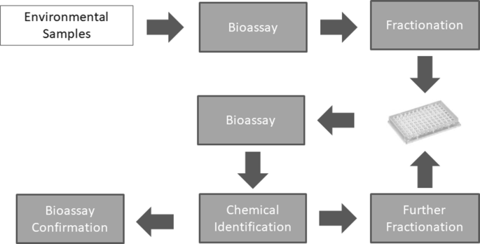 An ecotoxicological view on neurotoxicity assessment