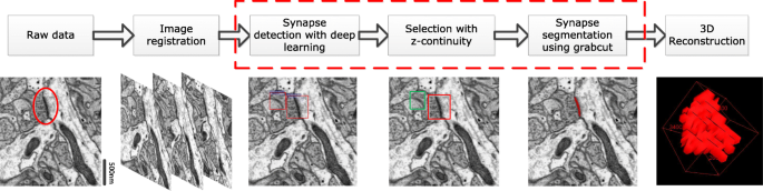Effective automated pipeline for 3D reconstruction of synapses based