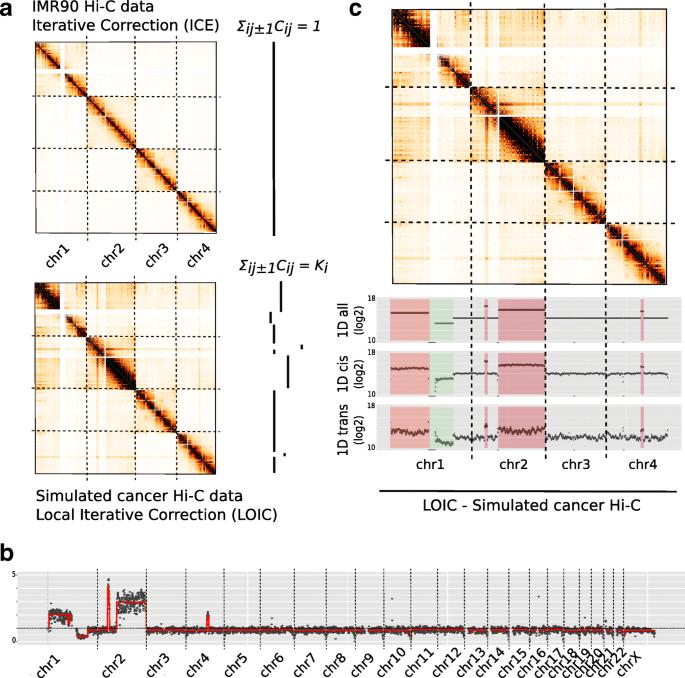 Effective normalization for copy number variation in Hi-C data | BMC