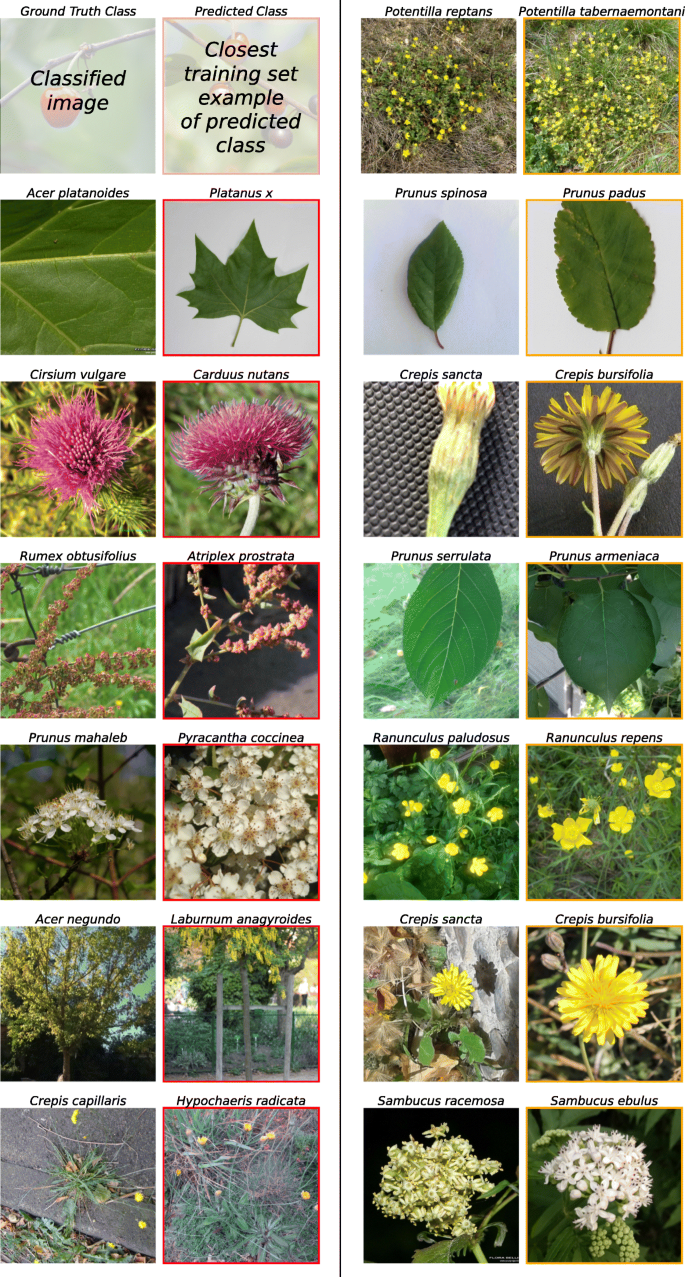Image-based classification of plant genus and family for
