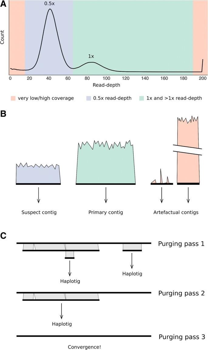 Purge Haplotigs: allelic contig reassignment for third-gen