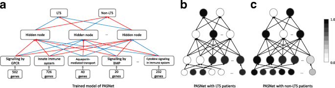 PASNet: pathway-associated sparse deep neural network for