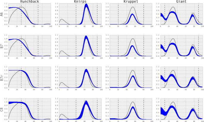 Bayesian model selection for the Drosophila gap gene network