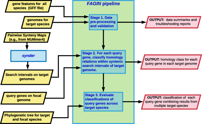 fagin : synteny-based phylostratigraphy and finer