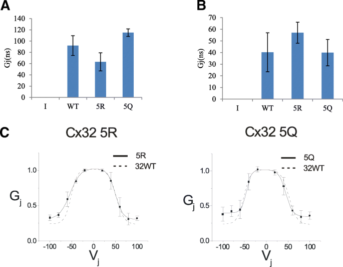 Acetylation of C-terminal lysines modulates protein turnover and