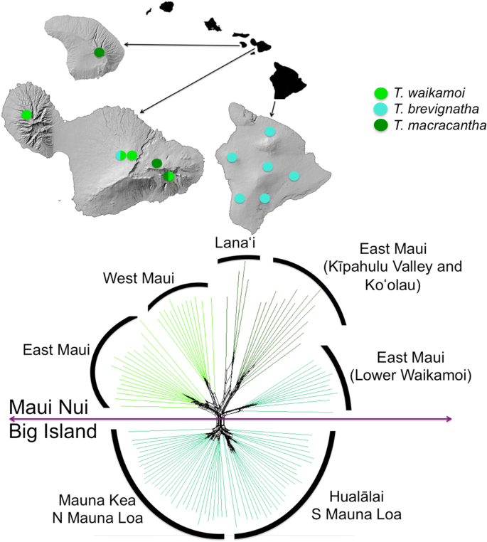 Co-occurrence of ecologically similar species of Hawaiian