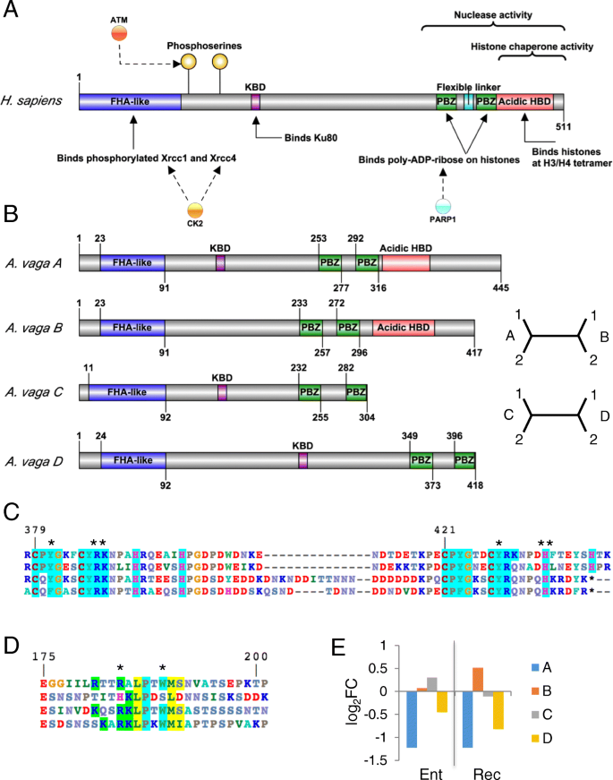Evolutionary diversity and novelty of DNA repair genes in
