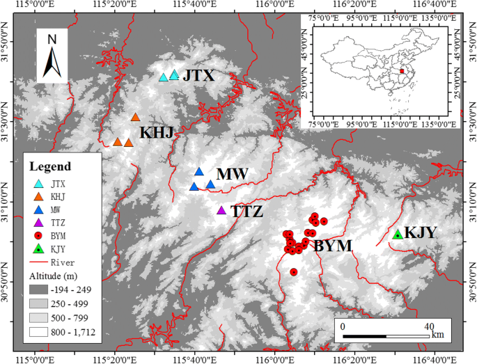 Long-term sky islands generate highly divergent lineages of