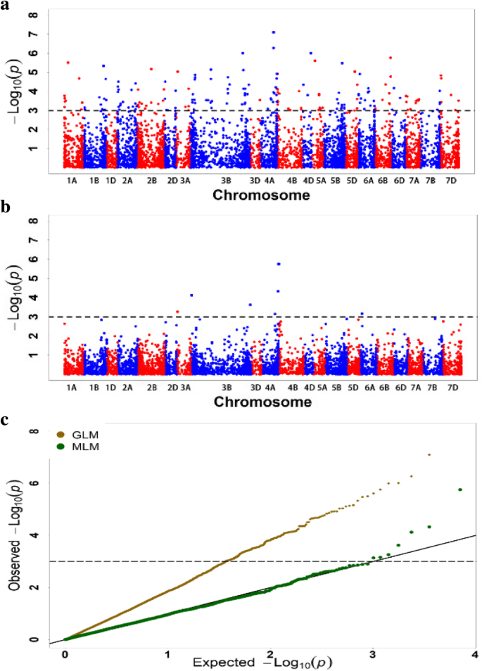 Characterization of molecular diversity and genome-wide