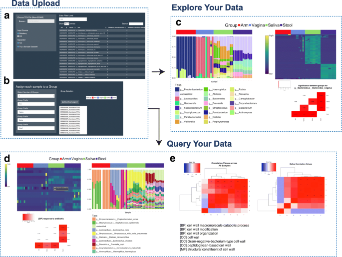 WHAM!: a web-based visualization suite for user-defined