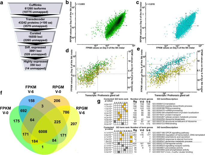 Refining a steroidogenic model: an analysis of RNA-seq datasets from