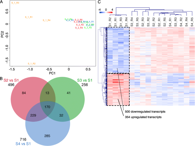 Deciphering the oviductal extracellular vesicles content across the