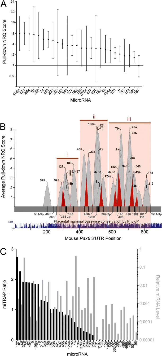 Mapping the Pax6 3' untranslated region microRNA regulatory