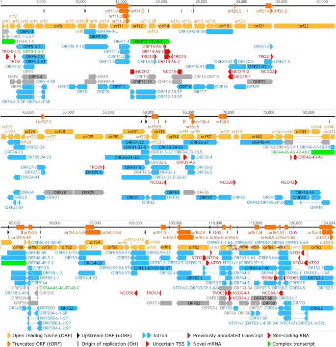 Long-read sequencing uncovers a complex transcriptome