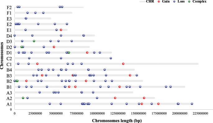 First genome-wide CNV mapping in FELIS CATUS using next