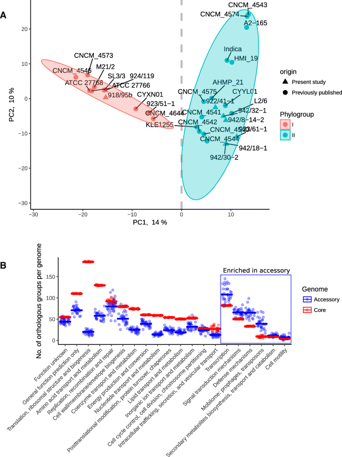 Comparative analysis of Faecalibacterium prausnitzii genomes shows a