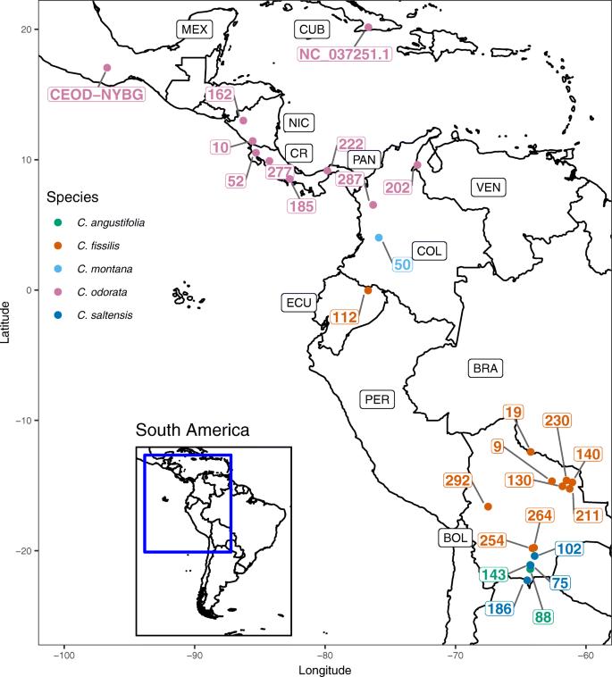 Genomic resources for the Neotropical tree genus Cedrela (Meliaceae