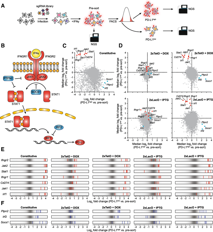 Development of drug-inducible CRISPR-Cas9 systems for large