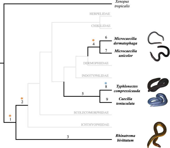 What lies beneath? Molecular evolution during the radiation of