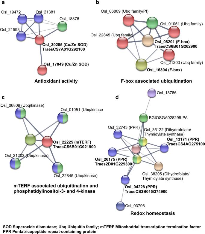 MicroRNA-guided regulation of heat stress response in wheat   BMC