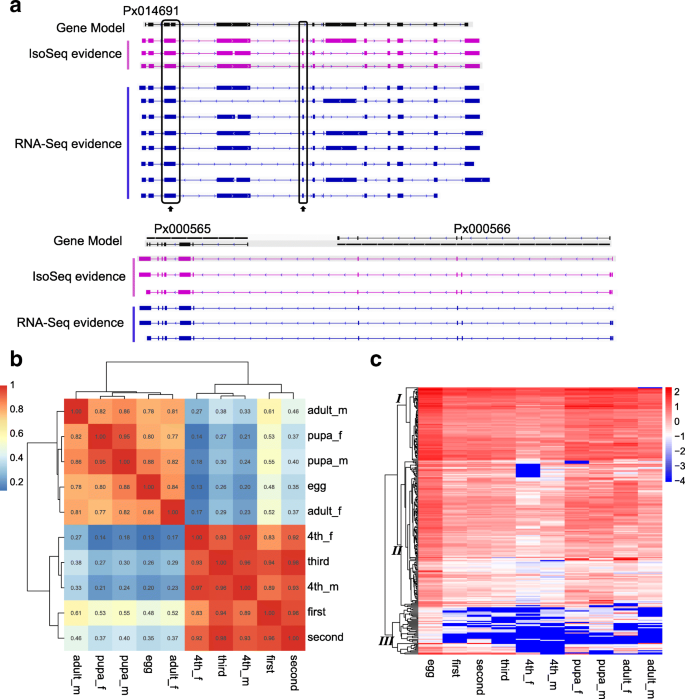 Genome-wide profiling of the alternative splicing provides insights