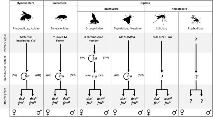 Identification of sex determination genes and their evolution in