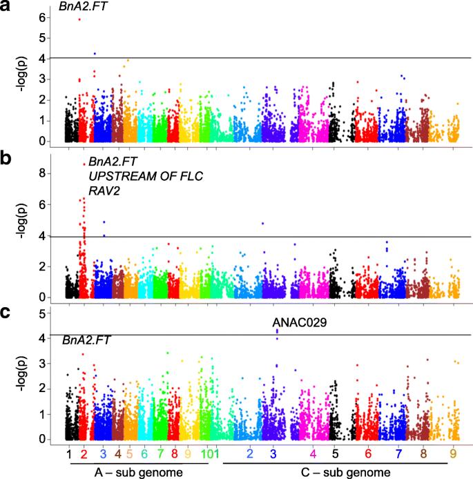GWAS hints at pleiotropic roles for FLOWERING LOCUS T in flowering