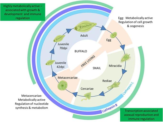 microbi de modele de margele