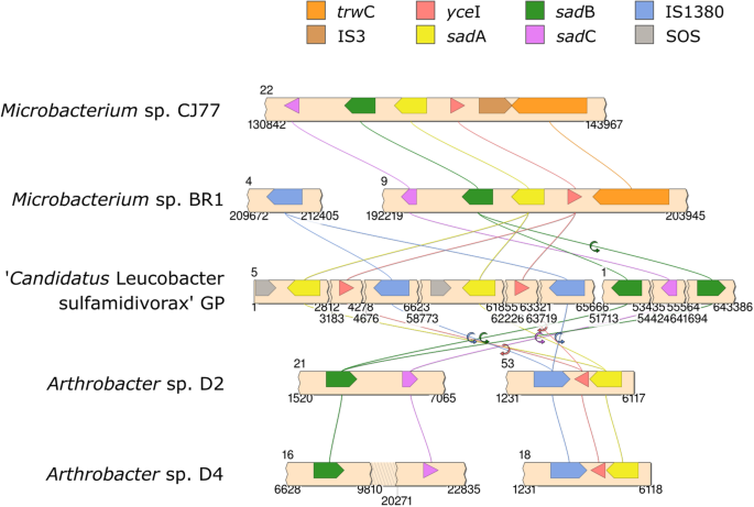 Comparative Genomics Reveals A Novel Genetic Organization Of The Sad Cluster In The Sulfonamide Degrader Candidatus Leucobacter Sulfamidivorax Strain Gp Bmc Genomics Full Text