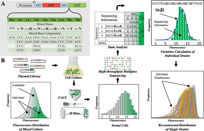 Massively Parallel Gene Expression Variation Measurement Of A Synonymous Codon Library Bmc Genomics Full Text