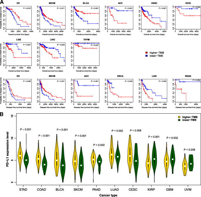 Correlate tumor mutation burden with immune signatures in