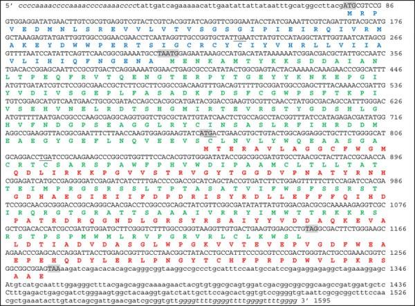 Evidence for methionine-sulfoxide-reductase gene transfer