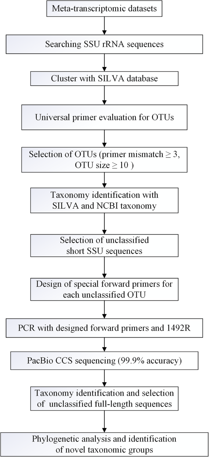 Design Of Targeted Primers Based On 16s Rrna Sequences In Meta Transcriptomic Datasets And Identification Of A Novel Taxonomic Group In The Asgard Archaea Bmc Microbiology Full Text